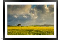 Dark clouds over a rape seed field, Framed Mounted Print