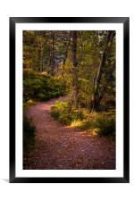 Pathway in the woods of Glen Affric, Framed Mounted Print