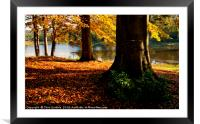 Autumn trees in the River Derwent valley, Framed Mounted Print