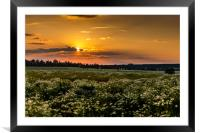 Czech counrtyside at sunset. Summer evening., Framed Mounted Print