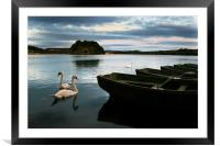 Swans on a Lake, Framed Mounted Print