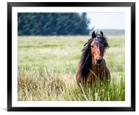 Wild., Framed Mounted Print
