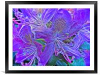 Purple Rhododendron, Framed Mounted Print