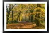 The Wentwood Forest in Autumn, Framed Mounted Print