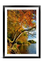 Autumn colours by Lake of Menteith, Framed Mounted Print