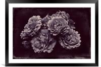ROSA REMEMBRANCE, Framed Mounted Print