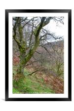 Ettrick Valley Woodland, Framed Mounted Print