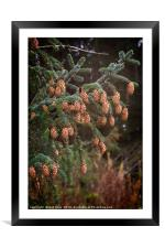 Ettrick Valley Woodland Pine Cones, Framed Mounted Print