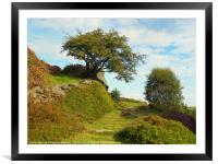 high moorland grass path in yorkshire with heather, Framed Mounted Print