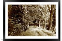 Tree lined track, Framed Mounted Print