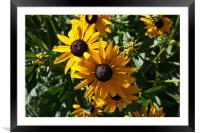 Pair of Sunflowers, Framed Mounted Print