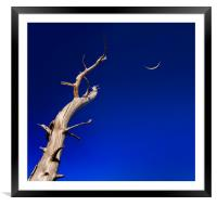 Dead tree reaches up to a crescent moon, Framed Mounted Print