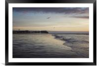 Seagulls feeding as sunset, Framed Mounted Print