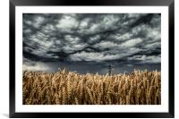 Wheat Field Thunder Storm, Framed Mounted Print
