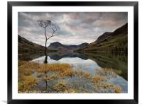 Sunrise Lone Tree Buttermere, Framed Mounted Print
