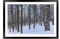 Forest in Winter, Framed Mounted Print