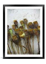 Poppy Heads and Seeds                      , Framed Mounted Print