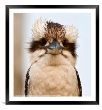 Bad hair day , Framed Mounted Print