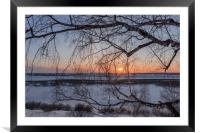 Birch tree and setting sun on a winter evening, Framed Mounted Print