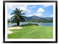 View of lake and palm tree, Framed Mounted Print