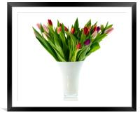bouquet of tulips in white vase, Framed Mounted Print