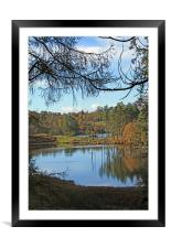 Tarn Hows through the trees, Framed Mounted Print