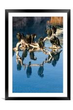 Cormorant reflections, Framed Mounted Print
