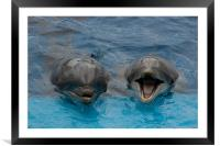 Laughing Dolphins, Framed Mounted Print