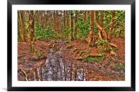 Woodland Stream, Framed Mounted Print