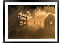 Hiding in the mist, Framed Mounted Print