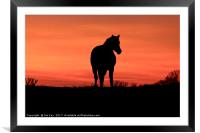 Horse at Sunset, Framed Mounted Print