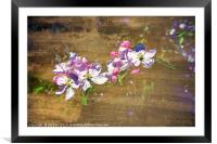 Apple Blossom in Abstract, Framed Mounted Print
