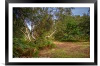 Silver Birch in the Clearing, Framed Mounted Print