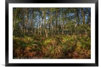 Autumn Ferns in the Woods, Framed Mounted Print