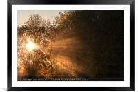 Sun rays shining through fog and trees, Framed Mounted Print
