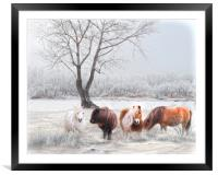 Shetlands in the Snow, Framed Mounted Print