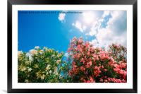 Colourful flowers in the spring, Framed Mounted Print