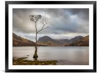 Lone Tree at Buttermere, Framed Mounted Print