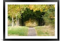 Woodland Walk in Autumn, Framed Mounted Print