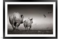 Black Rhinoceros cow with calf , Framed Mounted Print