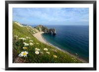 Durdle Daisies, Framed Mounted Print