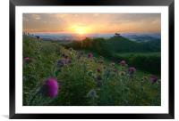 Thistles of Quarry Hill, Framed Mounted Print