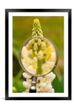 Flower and magnifying glass., Framed Mounted Print