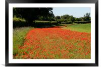 Edging of Poppies, Framed Mounted Print