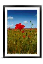 Poppies in the summer sunshine. No. 2, Framed Mounted Print