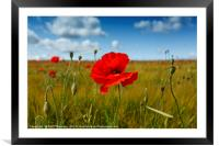 Poppies in the summer sunshine. No. 3, Framed Mounted Print