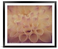 White and pink , Framed Mounted Print