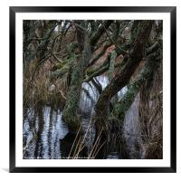 Watery Woodland, Framed Mounted Print