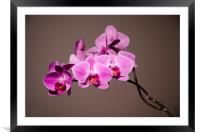 Purple Orchids Still Life, Framed Mounted Print