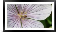 Purple and Yellow, Framed Mounted Print